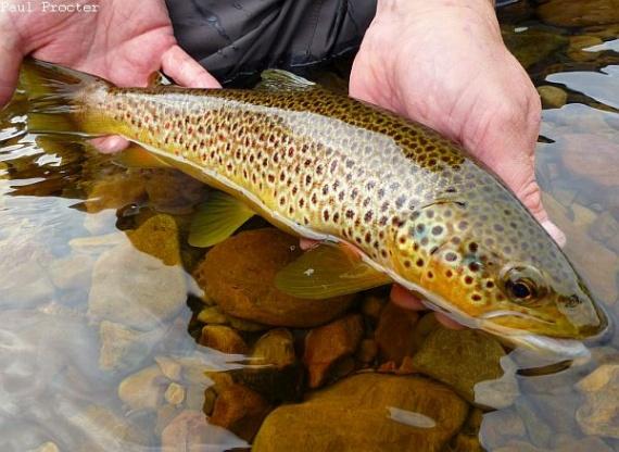 озеро бабинское рыбалка