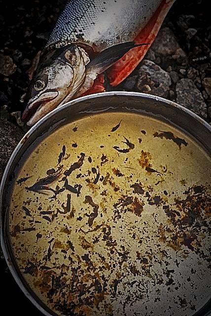 Корм лосося в пресной воде: больше, чем просто случайный перекус... Этот здоровяк проглотил целый ряд насекомых, а ещё воду и землю, и маленькие кусочки червя (вероятно, наживка от рыболова вниз по течению). Вода: 12 градусов по Цельсию, и 53,6 градусов по Фаренгейту. Северная Норвегия.